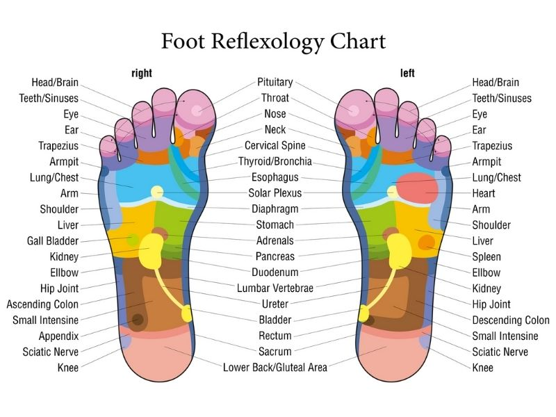 Foot reflexology chart showing the reflex points of different organs/areas of the body